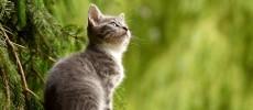 Un blog pour tout savoir sur les animaux