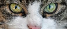 Comprendre et en savoir plus sur les chats