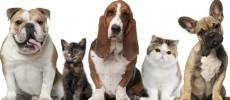 Une assurance chat ou chien comme bon compromis.